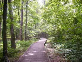 Photograph of the boardwalk in Big Oak Tree State Park, Mississippi County, Missouri.